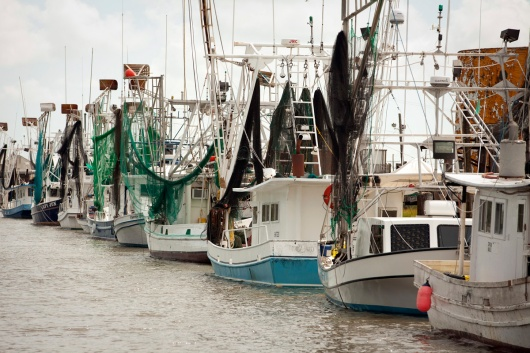 Shrimp boats lines up on the docks near Chauvin, Louisiana.