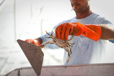 Sorting tables are used to remove anything that is not a shrimp.